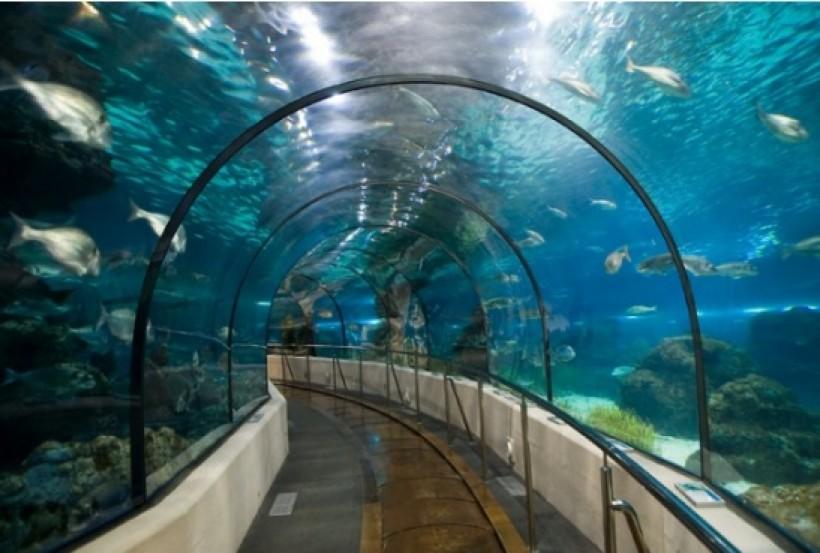 Merveilles des fonds marins - Marennes (17)